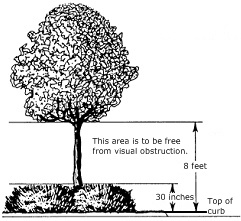 Tree Restrictions